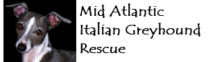 Mid Atlantic Italian Greyhound Rescue